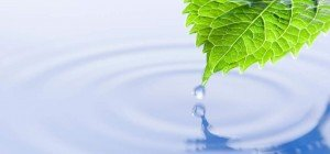 picture water and leaf pic therapy fees